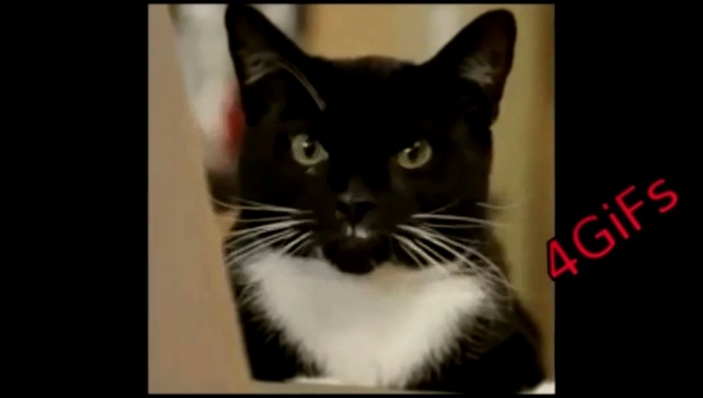 funny cats video 2015 funny cats 2015 funniest cats gif funny animals cat animation videos 4gifs