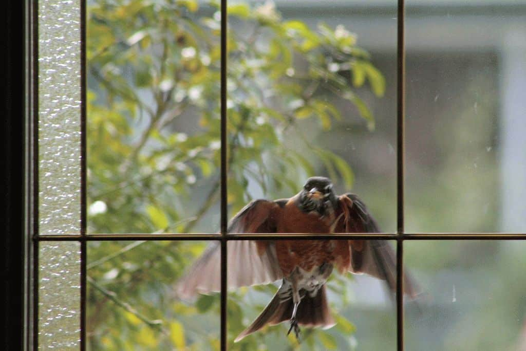 Птица во сне стучится в окно